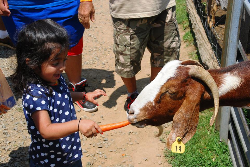 Meeting farm animals is part of the experience at Alstede Farms in New Jersey