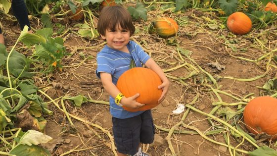 pick your own pumpkin at Alstede Farms