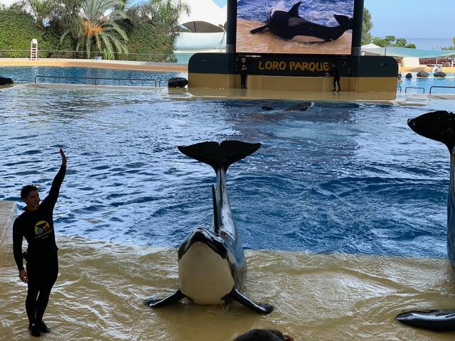 Loro Parque dolphinarium, Tenerife