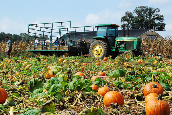 pumpkin patch and tractor