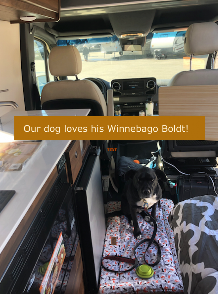Dog inside Winnebago Boldt
