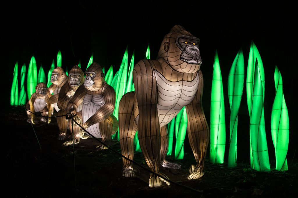 Gorillas in lights at Bronx Zoo Holiday Lights show.