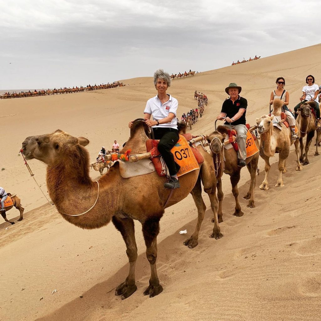 Camel caravan at Echoing Sands National Geopark, Dunhuang, China