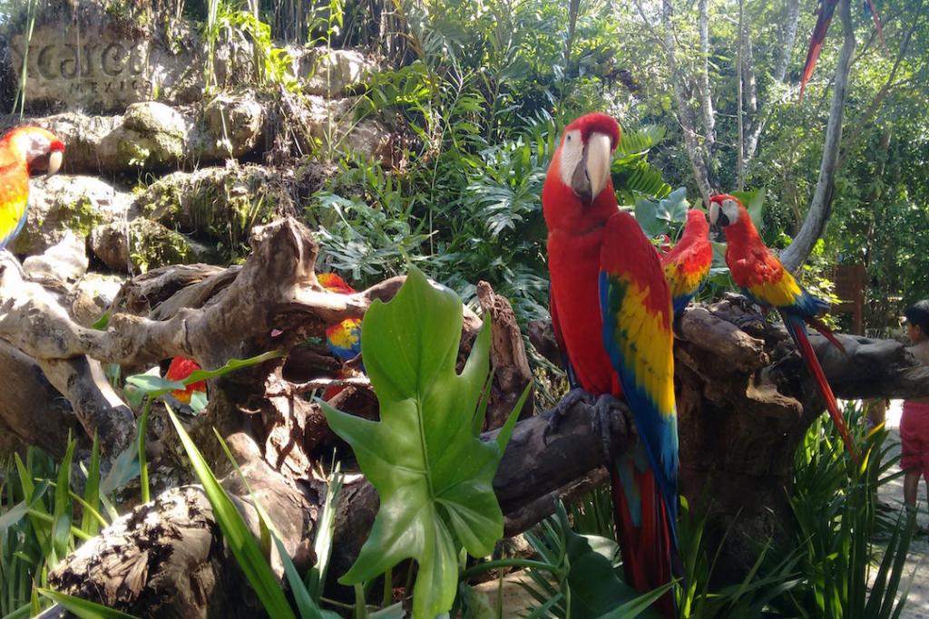 Parrots at Xcaret ecological park, Mexico