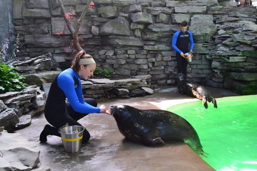 Seal trainers at work at Aquarium of Niagara