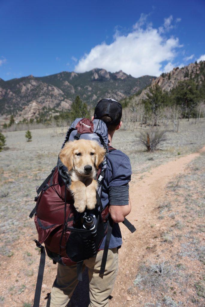 dog in backpack on hiking trail