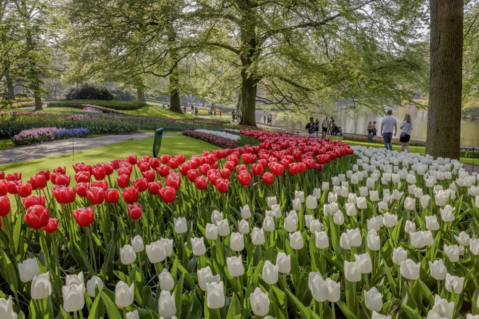 Garden path at Keukenhof Gardens, The Netherlands