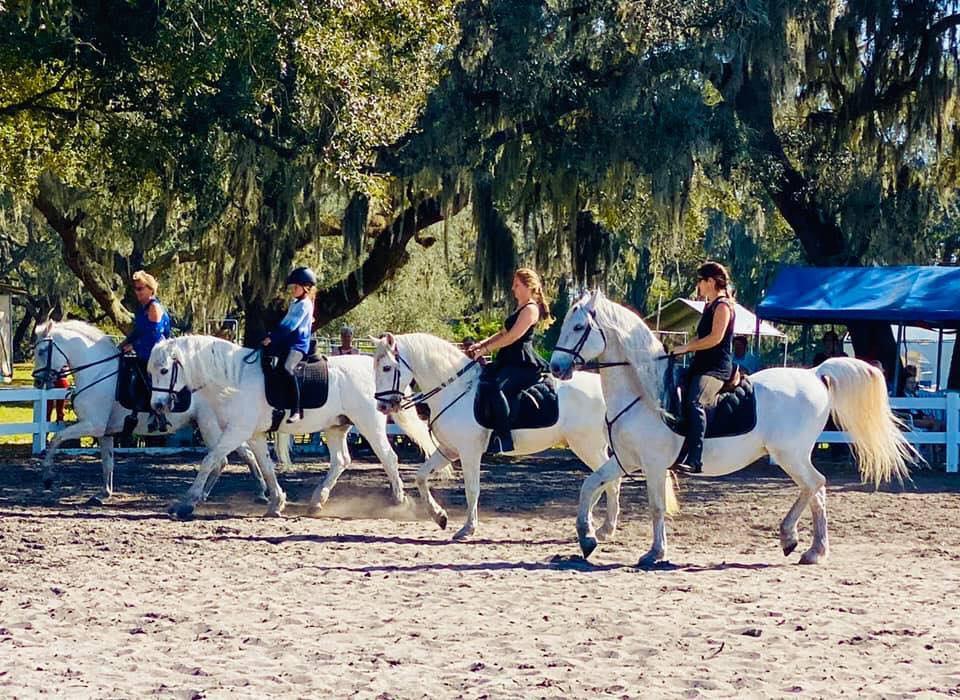 Lippinzan stallions at Hermann's Stables in Vermont