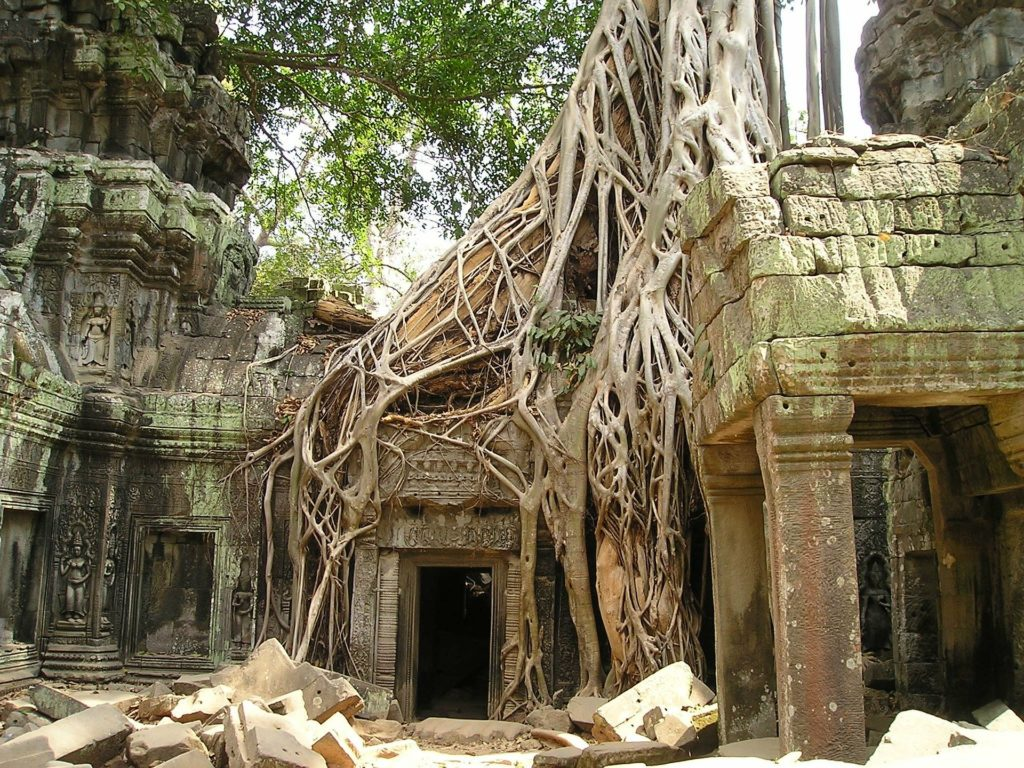 Tree roots grow over temples at Angkor Wat, Cambodia