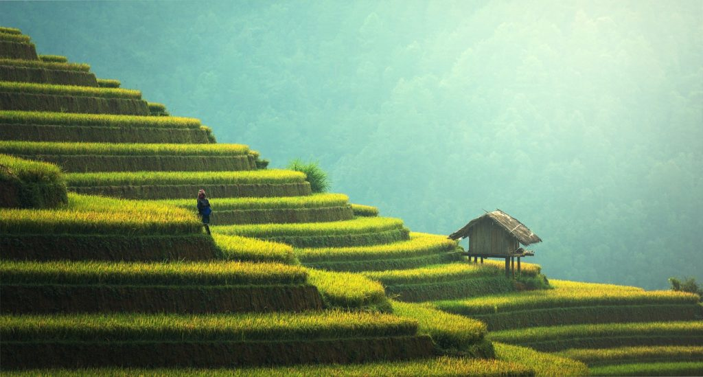 Rice paddy on terraced fields, Cambodia