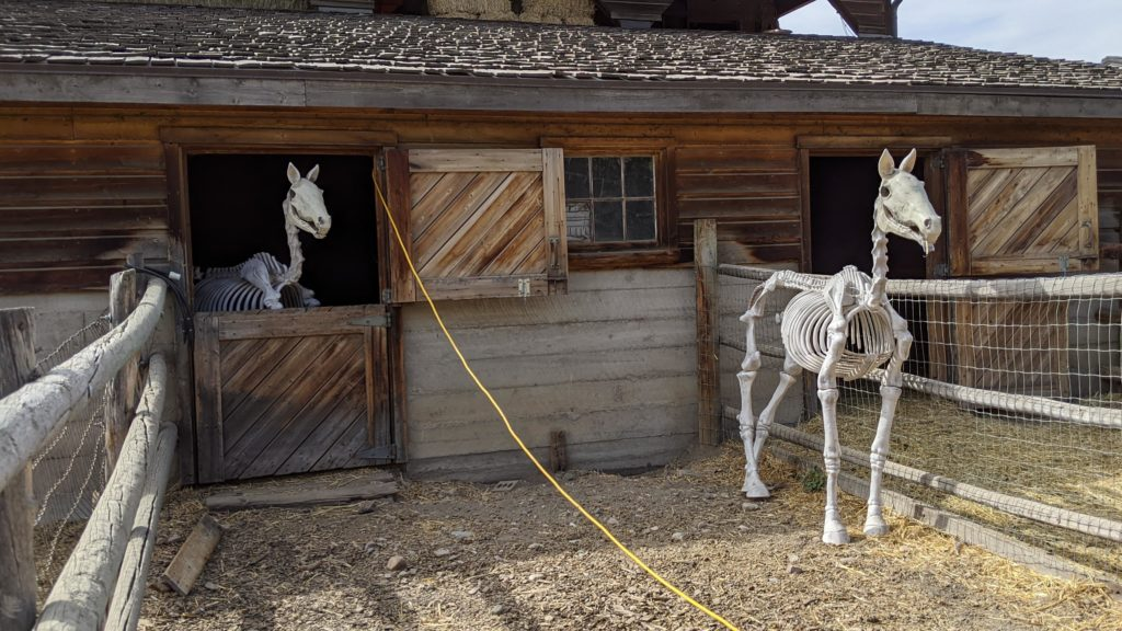 Horse skeleton in stable