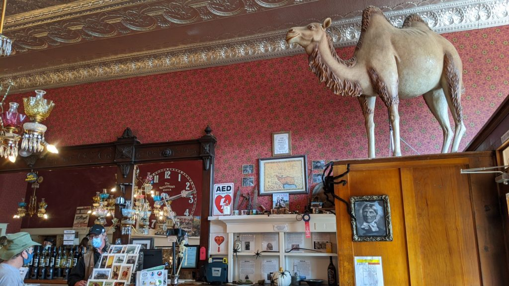 A camel dominates the ambiance at the Virginia City Tourism office.