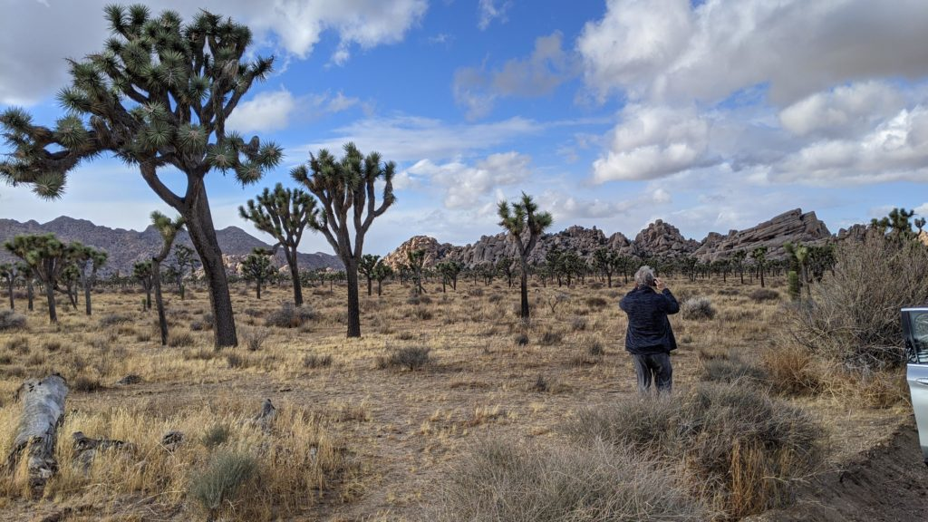 Man taking pictures of Joshua Trees at Joshua Tree National Park