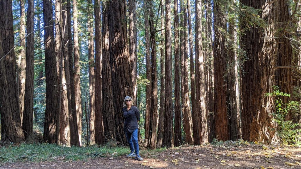 Woman on hiking trail in redwoods.