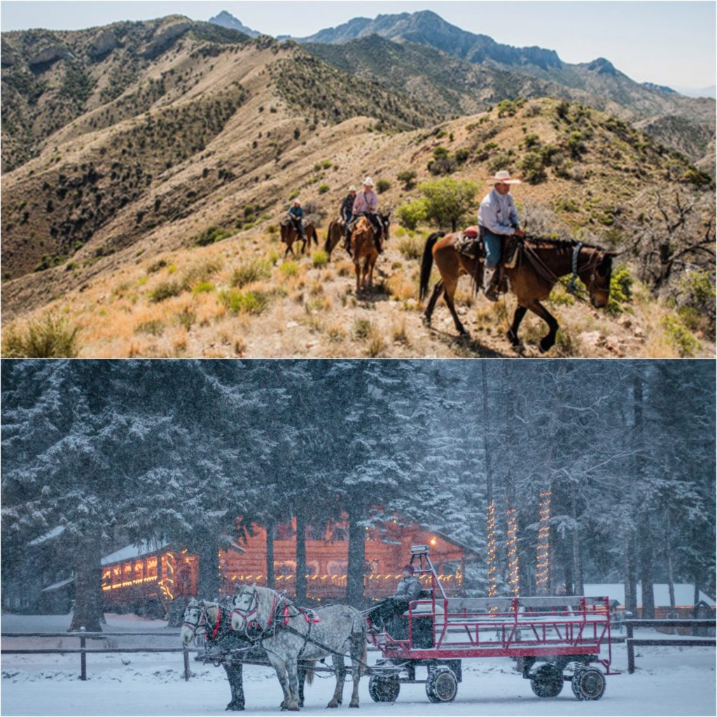 collage of horseback riding in desert and horse-drawn sleigh ride in the snow.