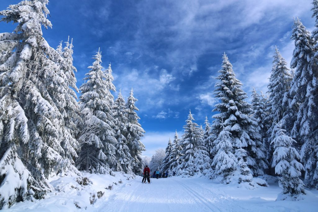 Couple on snowy path in the woods on cross country skis.