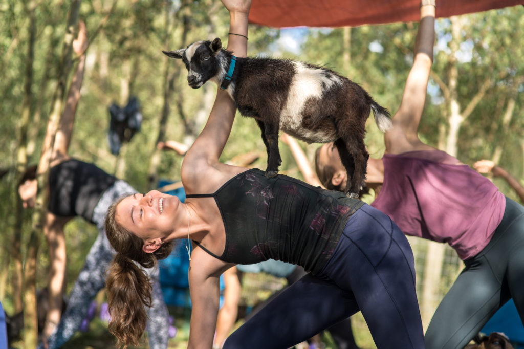 Goat yoga, where goats participate in your moves, is fun for teens and adults starting their yoga practice.