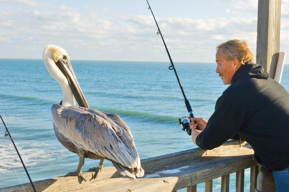 Pelican and fisherman lean on railing of fishing pier.