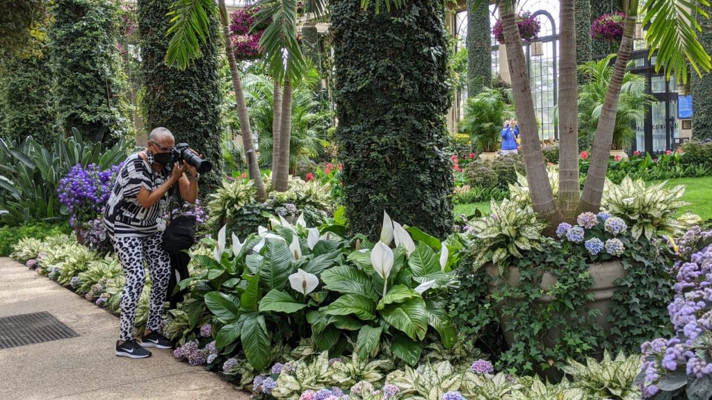 Black woman takes pictures in garden conservatory