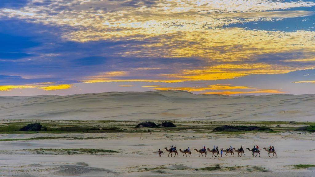 Camel caravan in Egypt at dusk.