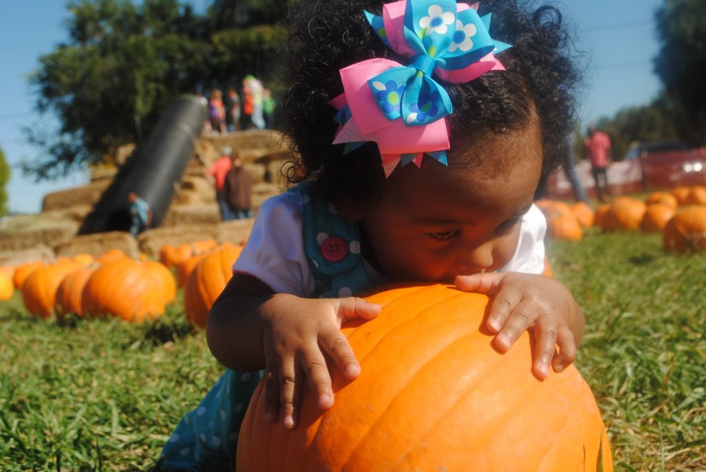 Young girl kisses a pumpkin in a patch.