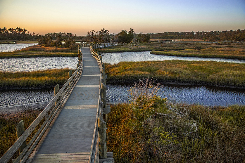 Havelock trail over bridges in Croatan National Forest in North Carolina.