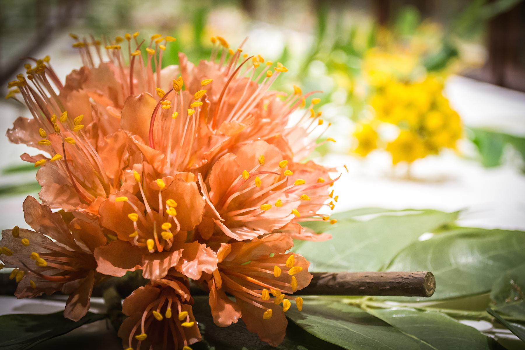 Harvard Museum Of Natural History Glass Flowers