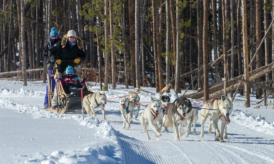 dog sled rides of winter park - 961×575