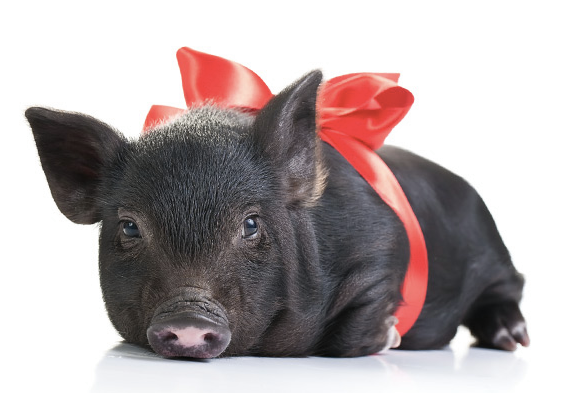 Adopt this Christmas Gift from Heifer International and Give Gifts that Give Back ...