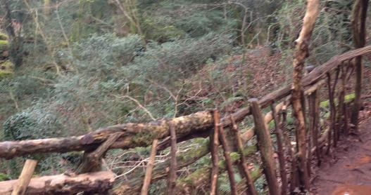 Bridge Created from Branches, Puzzlewood