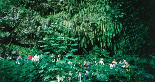 Kauai_Fern_Grotto_598125603