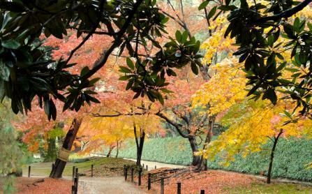 Step into the Fall Foliage at your Local State Park