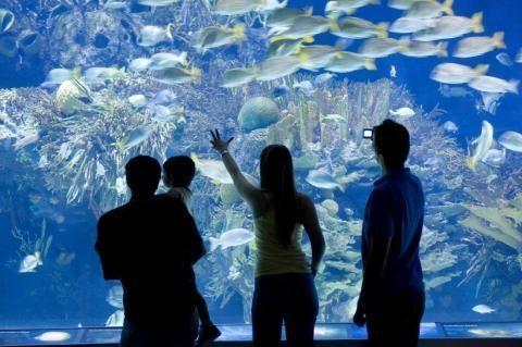 Spring break in valencia my family travels for Aquarium valencia bar