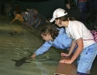 touching sharks at the zoo