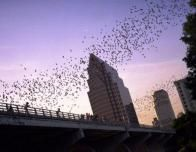austin-congress-bridge-bats