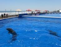 dolphin_0