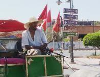 marrakech-caleche-driver