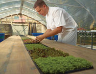 Sprouting Project greenhouse with Chef Daven Wardynski