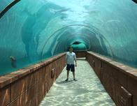 The sea life exhibits at Atlantis are seamingly endless!
