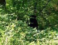 A Smoky Mountains Black Bear