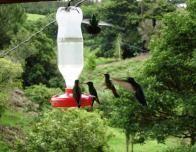 Hummingbirds Feeding on the Deck