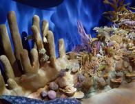 A reef diorama in the Cuba exhibit at the AMNH.