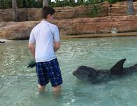 The new dolphin experiences at Atlantis' Dolphin Cay are amazing!