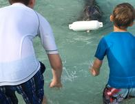 """You can even """"play fetch"""" with a dolphin!"""