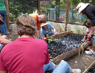 Reforestation project manned by volunteers from Fathom cruise ship in D.R.