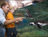 Meet penguins at the Georgia Aquarium in Atlanta; photo c. CityPASS