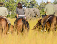 Horseback Safaris Botswana