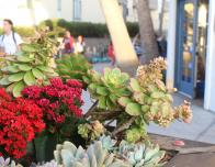 Succulents are growing on every corner and they are so beautiful.
