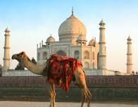 A saddled camel stands in fron of the Taj Mahal in Agra, Uttar Pradesh, India.