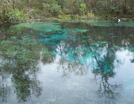 Swim Through the Natural Headsprings at Ichetucknee Springs State Park